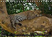 Tansania - Tierwanderung in der Serengeti (Tischkalender 2019 DIN A5 quer) - Produktdetailbild 2