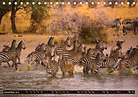 Tansania - Tierwanderung in der Serengeti (Tischkalender 2019 DIN A5 quer) - Produktdetailbild 12