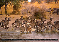 Tansania - Tierwanderung in der Serengeti (Wandkalender 2019 DIN A4 quer) - Produktdetailbild 12