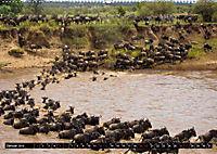 Tansania - Tierwanderung in der Serengeti (Wandkalender 2019 DIN A2 quer) - Produktdetailbild 1