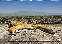 Tansania - Tierwanderung in der Serengeti (Wandkalender 2019 DIN A2 quer) - Produktdetailbild 11
