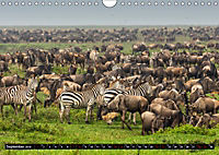 Tansania - Tierwanderung in der Serengeti (Wandkalender 2019 DIN A4 quer) - Produktdetailbild 9