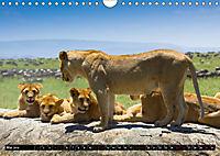 Tansania - Tierwanderung in der Serengeti (Wandkalender 2019 DIN A4 quer) - Produktdetailbild 5