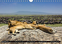 Tansania - Tierwanderung in der Serengeti (Wandkalender 2019 DIN A4 quer) - Produktdetailbild 11