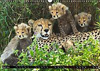 Tansania - Tierwanderung in der Serengeti (Wandkalender 2019 DIN A3 quer) - Produktdetailbild 4