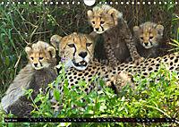 Tansania - Tierwanderung in der Serengeti (Wandkalender 2019 DIN A4 quer) - Produktdetailbild 4