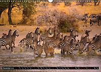 Tansania - Tierwanderung in der Serengeti (Wandkalender 2019 DIN A3 quer) - Produktdetailbild 12