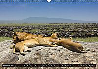 Tansania - Tierwanderung in der Serengeti (Wandkalender 2019 DIN A3 quer) - Produktdetailbild 11