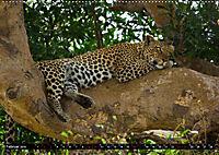 Tansania - Tierwanderung in der Serengeti (Wandkalender 2019 DIN A2 quer) - Produktdetailbild 2