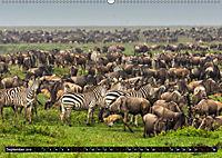 Tansania - Tierwanderung in der Serengeti (Wandkalender 2019 DIN A2 quer) - Produktdetailbild 9