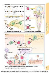 Taschenatlas Allergologie - Produktdetailbild 3