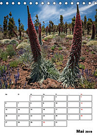 Teide und Cañadas (Tischkalender 2019 DIN A5 hoch) - Produktdetailbild 5