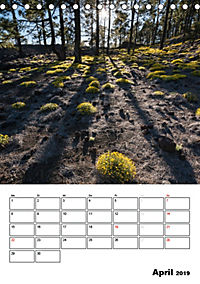 Teide und Cañadas (Tischkalender 2019 DIN A5 hoch) - Produktdetailbild 4