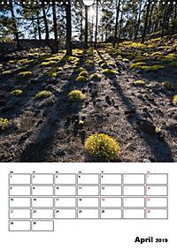 Teide und Cañadas (Wandkalender 2019 DIN A3 hoch) - Produktdetailbild 4