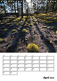 Teide und Cañadas (Wandkalender 2019 DIN A4 hoch) - Produktdetailbild 4