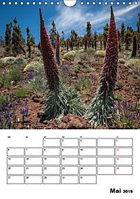 Teide und Cañadas (Wandkalender 2019 DIN A4 hoch) - Produktdetailbild 5