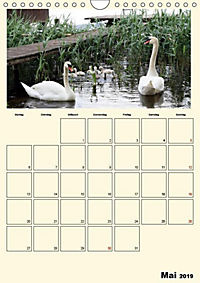 Terkinder von der Kaulquappe bis zum Kalb (Wandkalender 2019 DIN A4 hoch) - Produktdetailbild 5