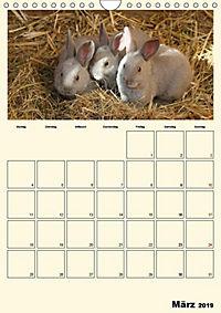 Terkinder von der Kaulquappe bis zum Kalb (Wandkalender 2019 DIN A4 hoch) - Produktdetailbild 3