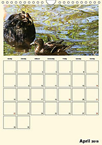 Terkinder von der Kaulquappe bis zum Kalb (Wandkalender 2019 DIN A4 hoch) - Produktdetailbild 4