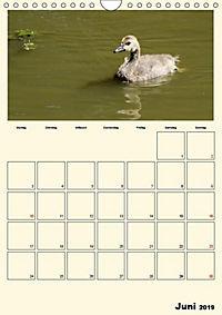 Terkinder von der Kaulquappe bis zum Kalb (Wandkalender 2019 DIN A4 hoch) - Produktdetailbild 6