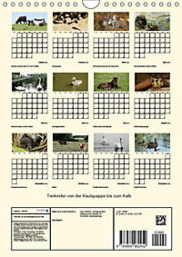 Terkinder von der Kaulquappe bis zum Kalb (Wandkalender 2019 DIN A4 hoch) - Produktdetailbild 13