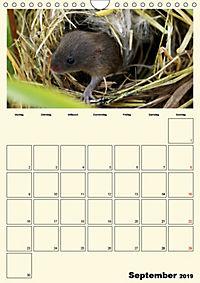 Terkinder von der Kaulquappe bis zum Kalb (Wandkalender 2019 DIN A4 hoch) - Produktdetailbild 9