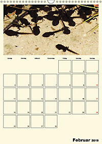 Terkinder von der Kaulquappe bis zum Kalb (Wandkalender 2019 DIN A3 hoch) - Produktdetailbild 2