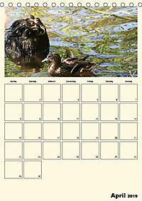 Terkinder von der Kaulquappe bis zum Kalb (Tischkalender 2019 DIN A5 hoch) - Produktdetailbild 4