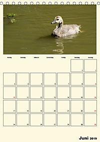 Terkinder von der Kaulquappe bis zum Kalb (Tischkalender 2019 DIN A5 hoch) - Produktdetailbild 6
