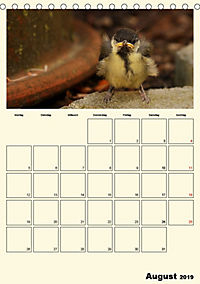 Terkinder von der Kaulquappe bis zum Kalb (Tischkalender 2019 DIN A5 hoch) - Produktdetailbild 8