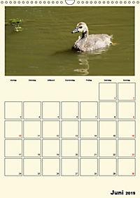 Terkinder von der Kaulquappe bis zum Kalb (Wandkalender 2019 DIN A3 hoch) - Produktdetailbild 6