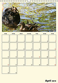 Terkinder von der Kaulquappe bis zum Kalb (Wandkalender 2019 DIN A3 hoch) - Produktdetailbild 4