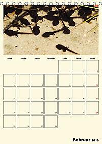 Terkinder von der Kaulquappe bis zum Kalb (Tischkalender 2019 DIN A5 hoch) - Produktdetailbild 2