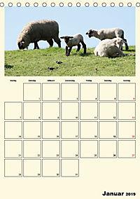 Terkinder von der Kaulquappe bis zum Kalb (Tischkalender 2019 DIN A5 hoch) - Produktdetailbild 1