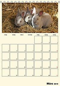 Terkinder von der Kaulquappe bis zum Kalb (Tischkalender 2019 DIN A5 hoch) - Produktdetailbild 3