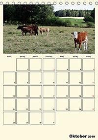 Terkinder von der Kaulquappe bis zum Kalb (Tischkalender 2019 DIN A5 hoch) - Produktdetailbild 10