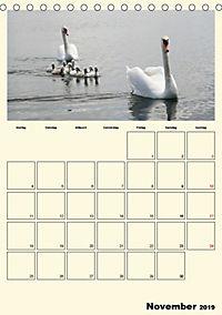 Terkinder von der Kaulquappe bis zum Kalb (Tischkalender 2019 DIN A5 hoch) - Produktdetailbild 11