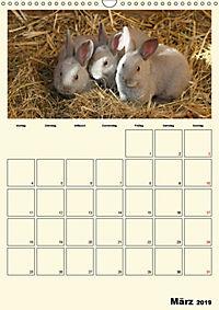 Terkinder von der Kaulquappe bis zum Kalb (Wandkalender 2019 DIN A3 hoch) - Produktdetailbild 3