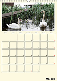 Terkinder von der Kaulquappe bis zum Kalb (Wandkalender 2019 DIN A3 hoch) - Produktdetailbild 5