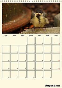 Terkinder von der Kaulquappe bis zum Kalb (Wandkalender 2019 DIN A3 hoch) - Produktdetailbild 8