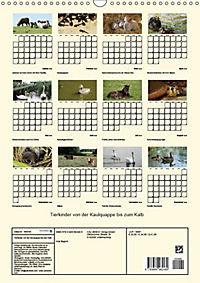 Terkinder von der Kaulquappe bis zum Kalb (Wandkalender 2019 DIN A3 hoch) - Produktdetailbild 13