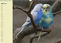 Terminplaner Wellensittiche (Wandkalender 2019 DIN A3 quer) - Produktdetailbild 4