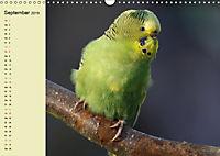 Terminplaner Wellensittiche (Wandkalender 2019 DIN A3 quer) - Produktdetailbild 9