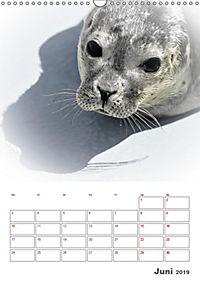 Texel - Momente die verzaubern (Wandkalender 2019 DIN A3 hoch) - Produktdetailbild 6
