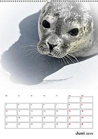 Texel - Momente die verzaubern (Wandkalender 2019 DIN A2 hoch) - Produktdetailbild 6