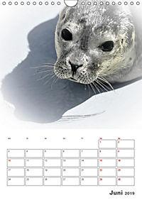 Texel - Momente die verzaubern (Wandkalender 2019 DIN A4 hoch) - Produktdetailbild 6