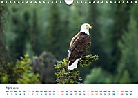 The Alaska Calendar UK-Version (Wall Calendar 2019 DIN A4 Landscape) - Produktdetailbild 4