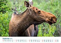 The Alaska Calendar UK-Version (Wall Calendar 2019 DIN A4 Landscape) - Produktdetailbild 9