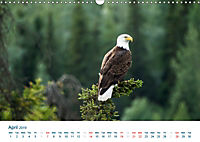 The Alaska Calendar UK-Version (Wall Calendar 2019 DIN A3 Landscape) - Produktdetailbild 4