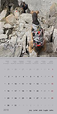 The Alpinedale (Wall Calendar 2018 300 × 300 mm Square) - Produktdetailbild 7